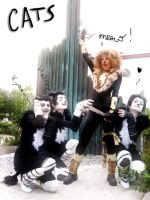 Rum Tum Tugger and Fans Cats by Tsu-yaa