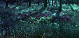 Dark Forest 03 by CD-STOCK