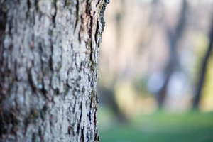 tree trunk with dof by JoaoYates