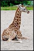 New Kid on the Block by Haywood-Photography