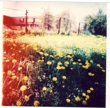 pinhole's yellow points by BlackDennie