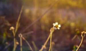 Sunset's flower by YongL