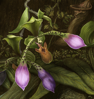 Orchids by pixelfish