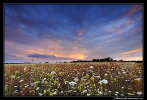 Twilight Flowers by Shahenshah