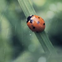 can't beat lady bugs by shtrumf