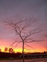 Sunset tree by Ripplin