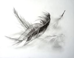 Feathers by ruthhoppe