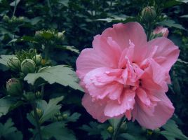 Petals in the Rain by Finchley