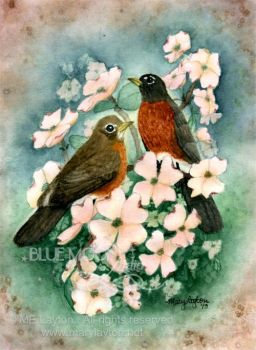 American Robins and Pink Dogwood Blossoms by MaryLayton