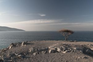 tree_in_musandam2 by simo2409