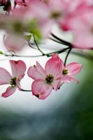 Spring Blossom 3 by Art-Photo