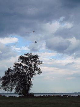Lake Erie 45 August 23 2015 by analillithbar