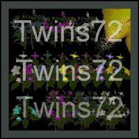 Hibiscus by Twins72-Stocks