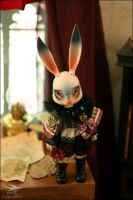 Bunny in the library by fairchildren