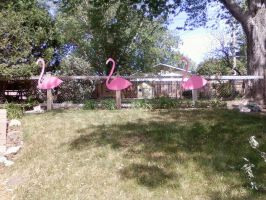 Pink Flamingoes by ellenoma