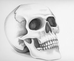 Technical Skull Illustration by Xsore