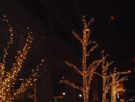 Christmas lights on the trees by mylesterlucky7