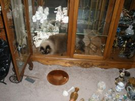 Jumper in china Cabinet by baronbeandip