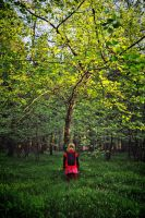 Alone in the woods by tomsumartin