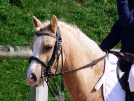 Competition dressage 1 by Driif