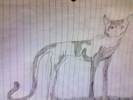 warrior cat by losttaddy