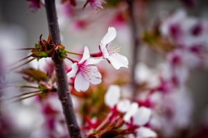 spring 09 by tobiasth