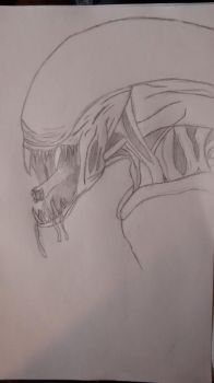 Xenomorph Sketch by Calltrix