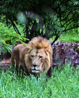 King by andras120