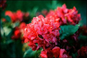 Red by Apperhension