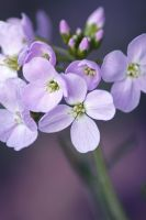 spring flower by Pamba
