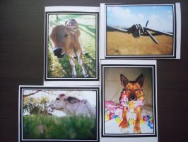 Card Project Order 1 by Iluvbiscuit2