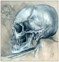 Skull Study by colinharbut