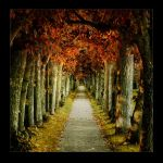 The Fall by raun