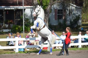Lipizzaner Stallions 13 by Lauren-Lee