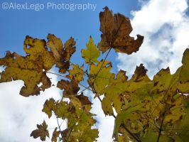 Yellow leaves on blue sky by AlexLego