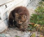 Where is my mouse?2 by OlgaCherkasova