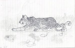 African Leopard by mikiayla97