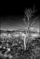 Broken Mesa, St George, Utah by lidarman