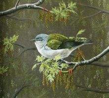 Tennessee Warbler by JacquelineRae