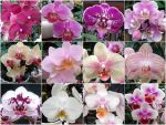 Orchids by Taeryne