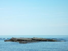 Island of seagulls by LucieG-Stock