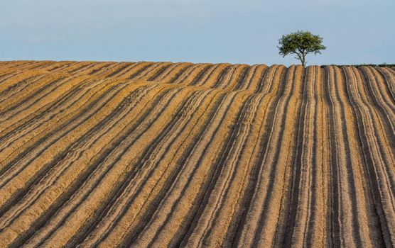 corduory field by lesterlester