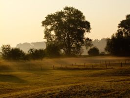 Sunday morning coming down 025 by picmonster