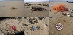 findings on the beach 2 by dexter121uk