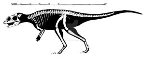 Yinlong downsi skeletal reconstruction by ornithischophilia
