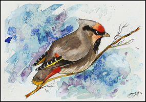 Waxwing by SunStateGalleries