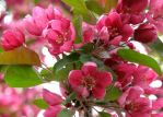 Tree Blooms by JamminJo