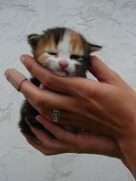 Baby Cat 03 by FantasyStock