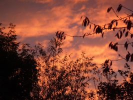 Saturday Evening from Bedroom Window 6 by SrTw