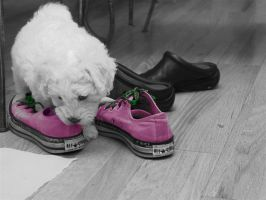 Converse and Pup by stripped101